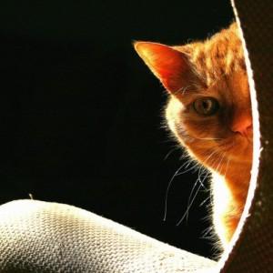 Кот выглядывает из-за дивана