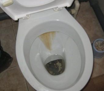 Провести туалет в домашних условиях 98
