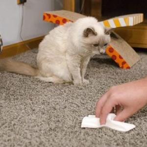 Кошачья лужа на ковре