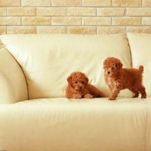 Два щенка на диване