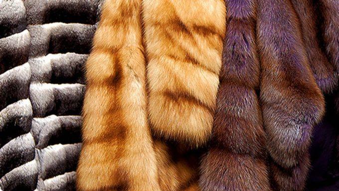 Как безопасно почистить мех в домашних условиях. Простые средства и советы, как с легкостью почистить мех в домашних условиях
